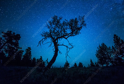 Stars and Small Tree, Oregon