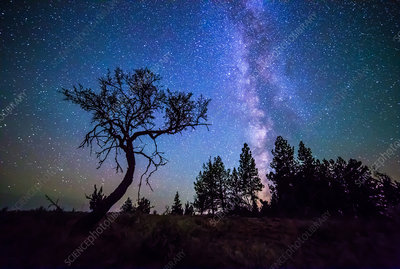 Milky Way and Small Tree, Central OR