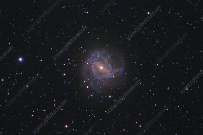 M83, the Southern Pinwheel Galaxy