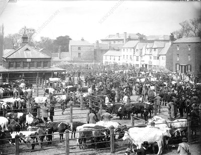 Oxford cattle market, 1890s