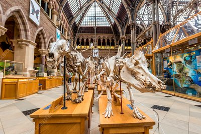 Exhibits at the Oxford University Museum of Natural History