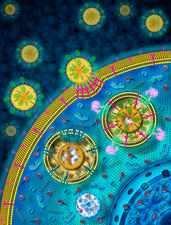 Nanoparticles targeting cancer cells, illustration