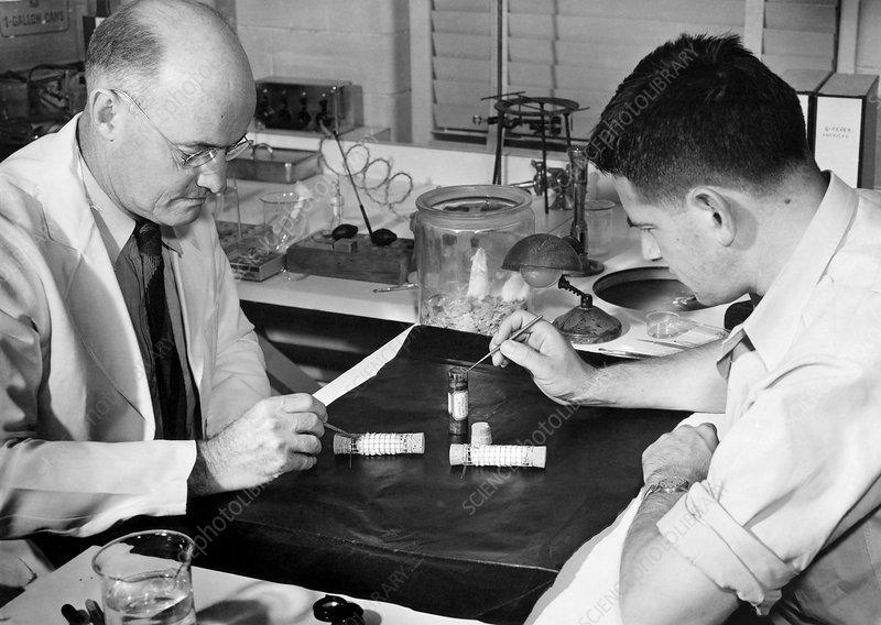 Scrub typhus research, 1940s