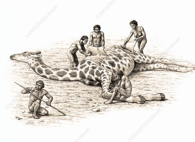 Homo ergaster feeding on a giraffe