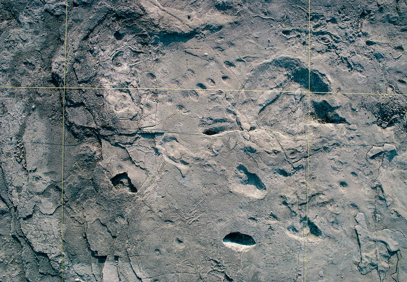 Hominid and elephant footprints