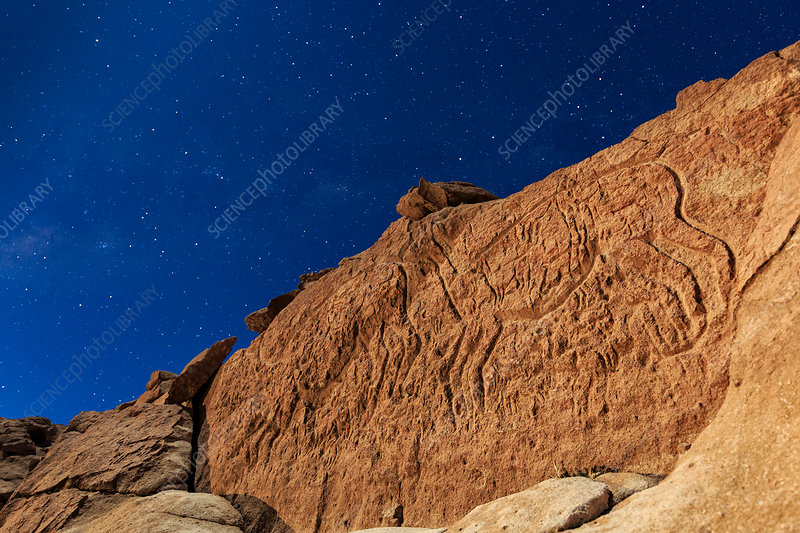 Atacama llama rock art in moonlight