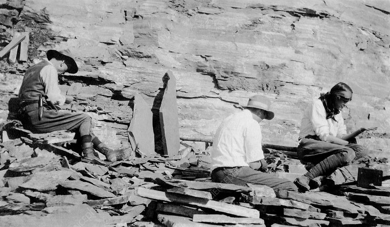 Charles D. Walcott with son and daughter at Burgess Shale - Stock ...