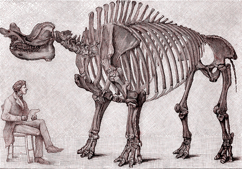 Brontops prehistoric rhino, 19th C illustration