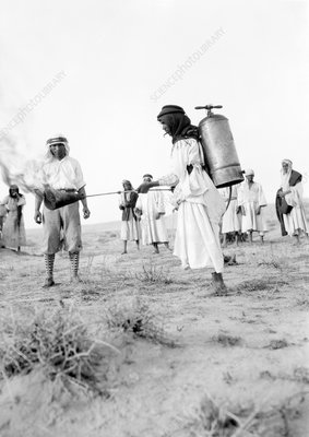 Locust control using flame thrower, Palestine, 1915