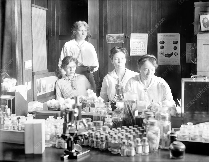 Women botanists at the US Department of Agriculture