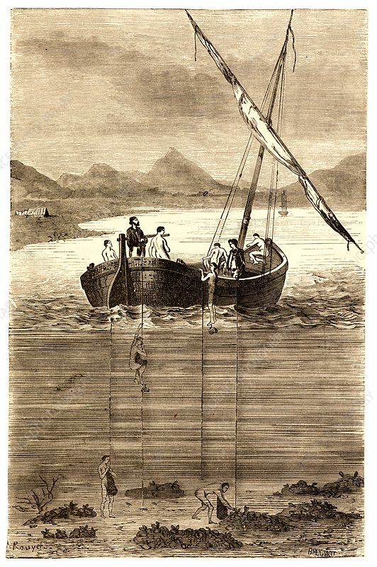 Pearl diving, 19th century illustration