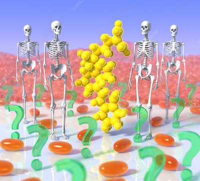 Vitamin D endocrine system, conceptual image