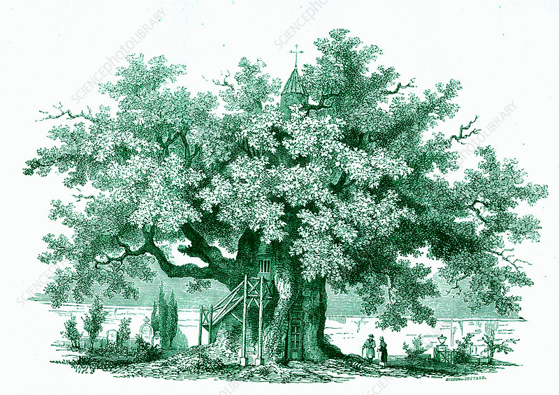 Oak treehouse, 19th Century illustration