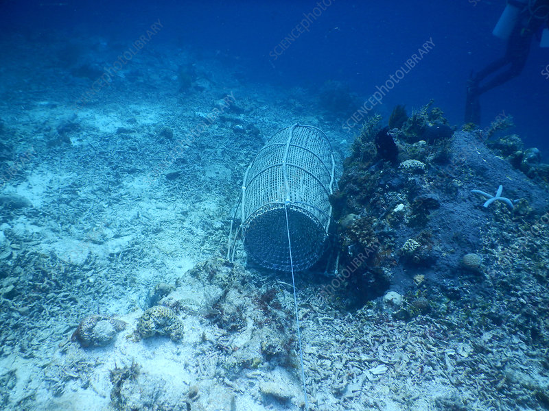 Fishing Trap