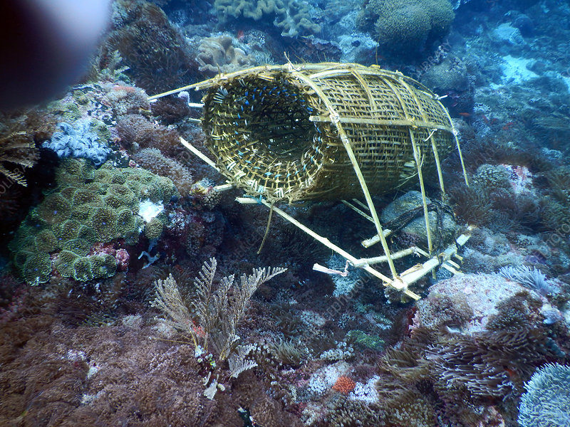 Fish Trap on Coral Reef