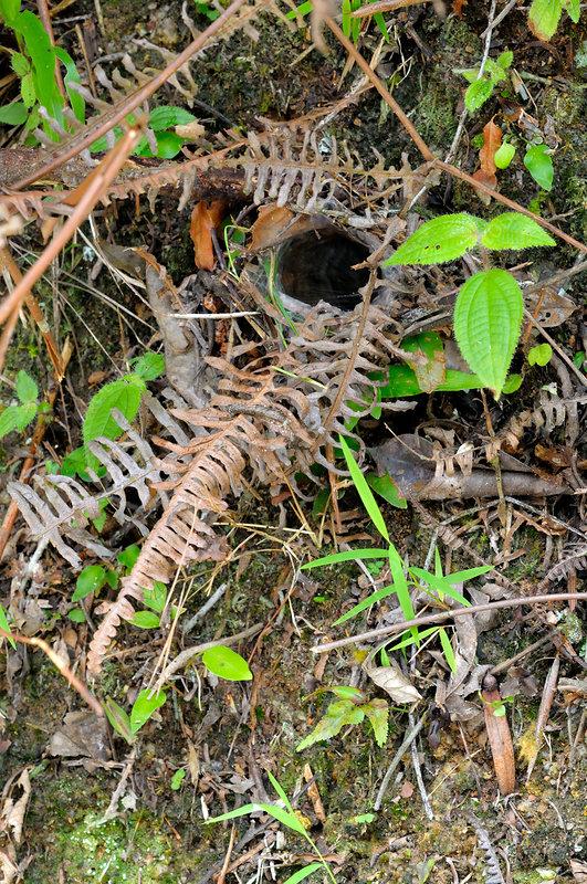 Tarantula Burrow