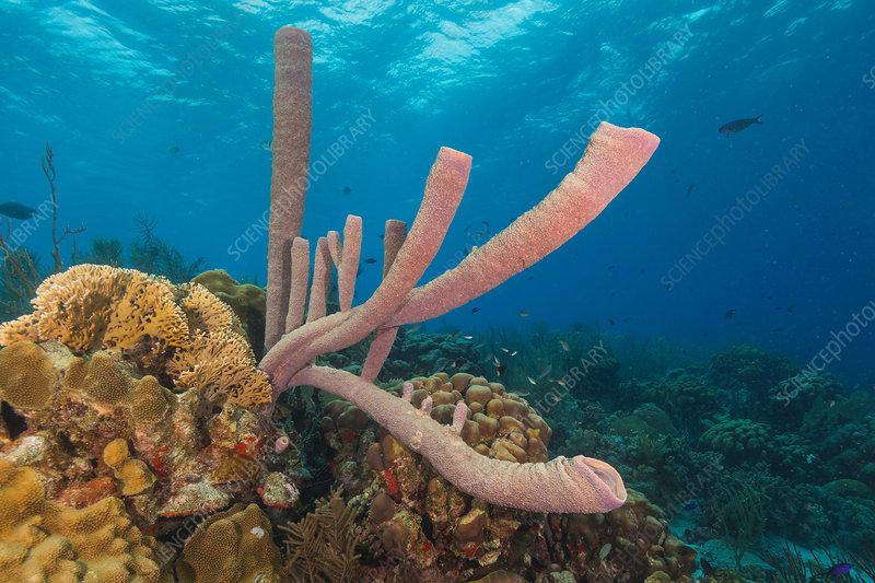 Stove-pipe Sponge