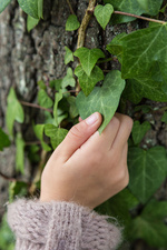 Child's hand touching an ivy leaf