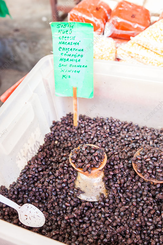 Ants sold in a Mexican market