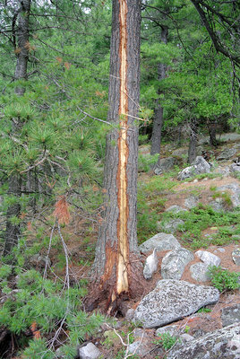 Lightning Strike on Tree
