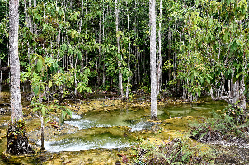Freshwater swamp forest