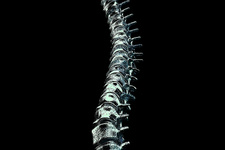 Spine, illustration