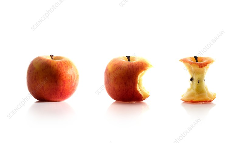 Apple eating sequence