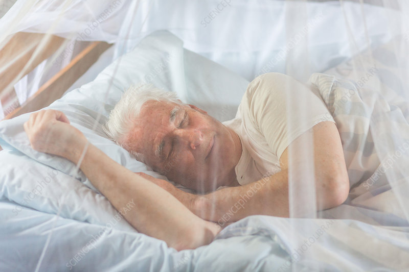 Man napping in bed under a mosquito net