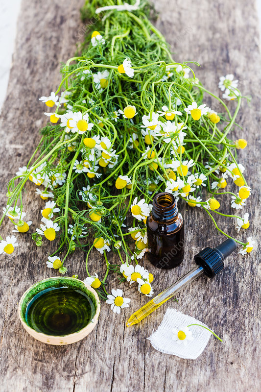 Essential oil of chamomile