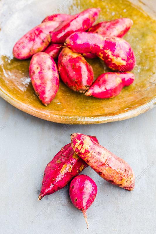 Sweet potatoes (Ipomoea batatas)