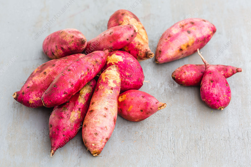 Sweet potatoes (Ipomoea batatas)