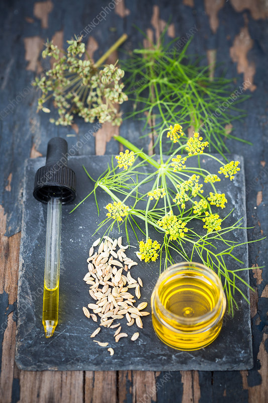 Essential oil of fennel