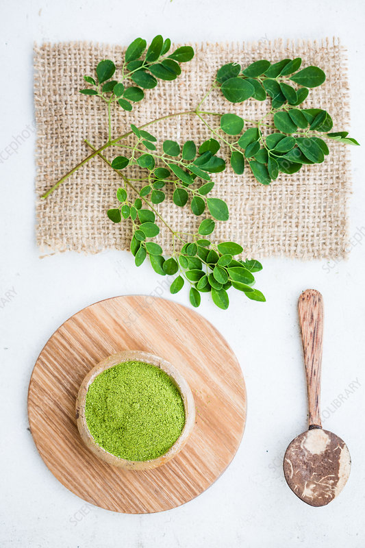 Powder of Moringa oleifera