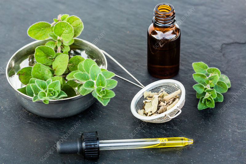 Essential oil of marjoram (organum majorana)