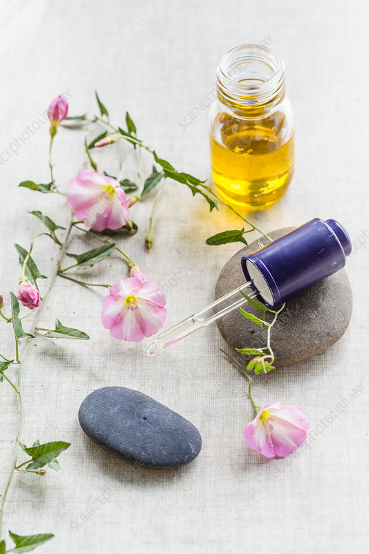 Essential oil of bindweed (Convolvulus arvensis)