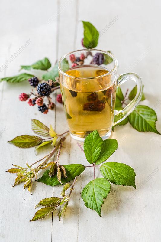 Leaves bushes herbal tea