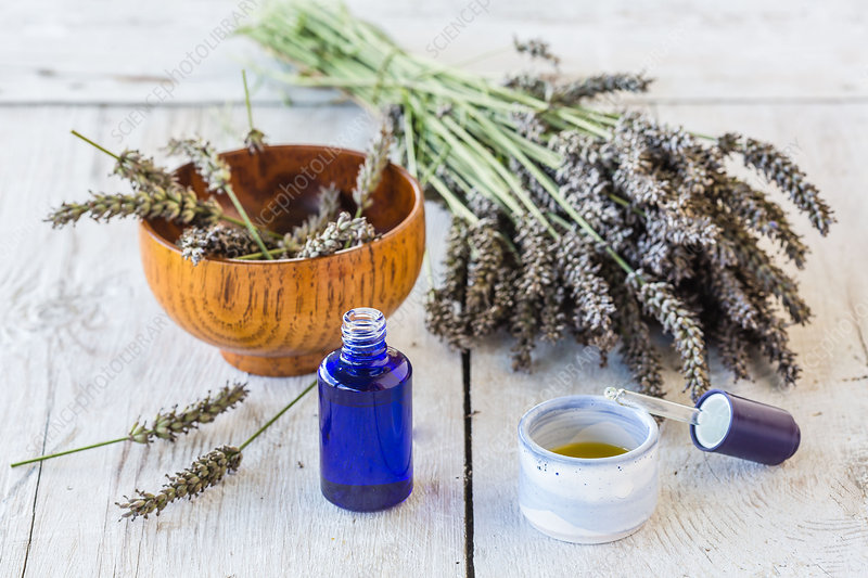Essential oil of lavender (Lavandula sp)