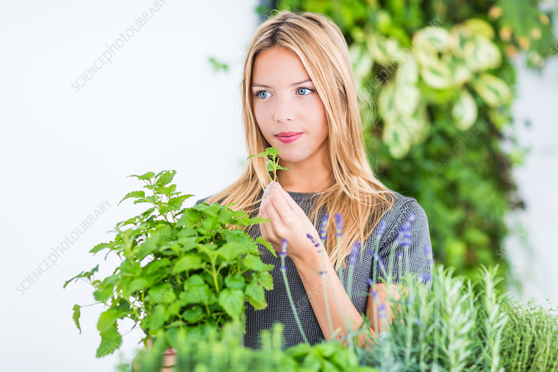 Woman inhaling lemon balm fragrance