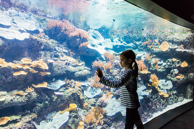 Kids visiting an aquarium