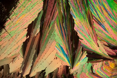 Coumarin crystals, polarised light micrograph