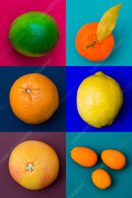Citrus fruits assorted