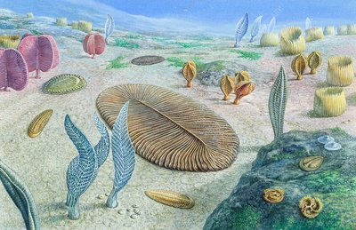 Ediacaran organisms, illustration