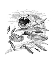 Dunkleosteus hunting its prey, illustration