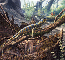 Hylonomus reptile, illustration