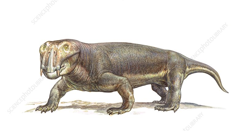 Lystrosaurus therapsid, illustration