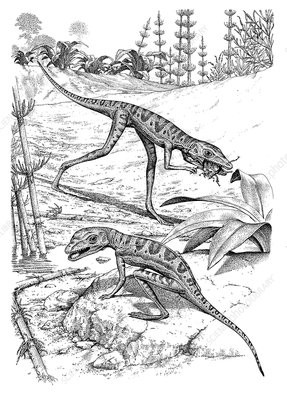 Scleromochlus reptiles, illustration