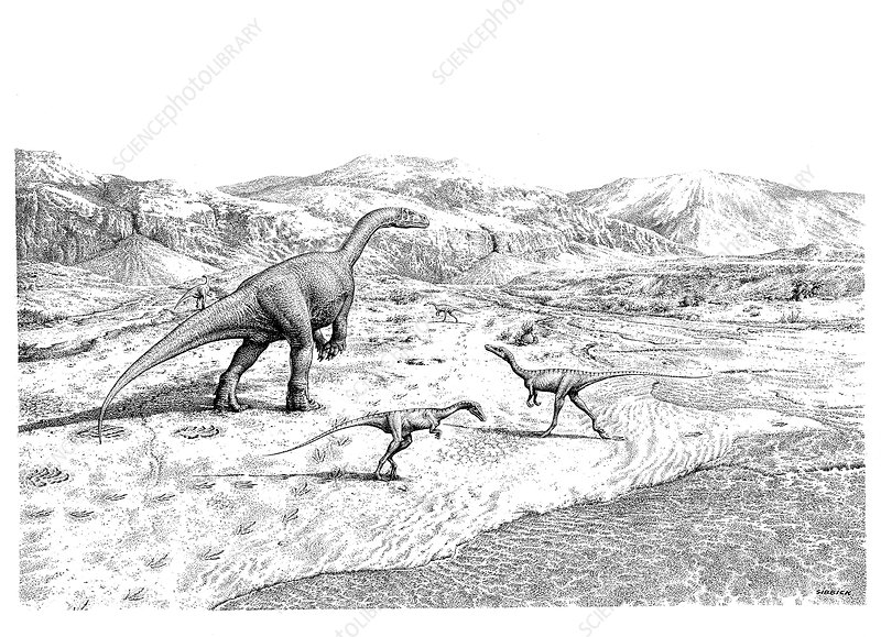 Prosauropod and theropod dinosaurs, illustration