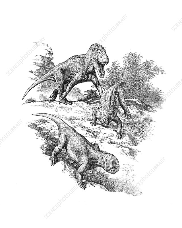 Saurosuchus and Hyperodapedon reptiles, illustration