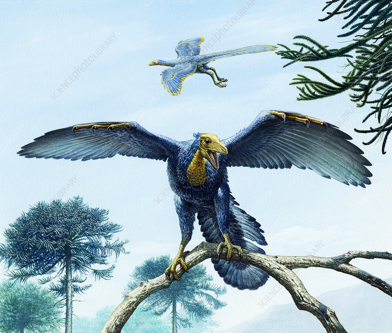 Archaeopteryx bird-like dinosaurs, illustration