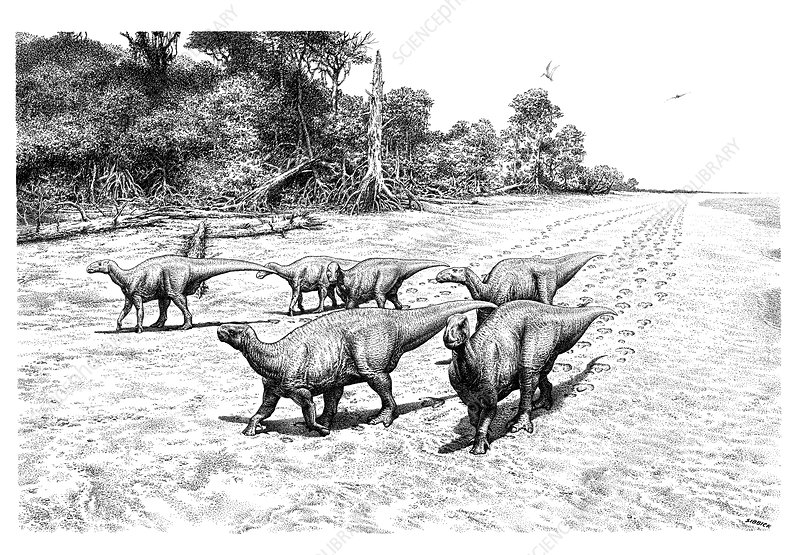 Iguanodon dinosaur trackway, illustration
